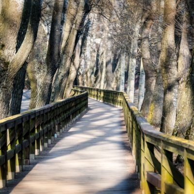 verschlungener Naturpfad in Fürth